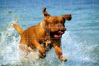 Hund im Wasser spielend Fliesenbild